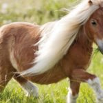 poney.LF3W48ct4Dr9